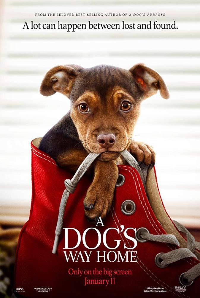 A Dogs Way Home (2019) English 720p HDRip x264 700MB