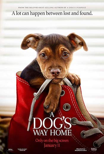 A Dogs Way Home 2019 Dual Audio Hindi 300MB WEB-DL 480p
